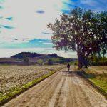 padova roma in bici