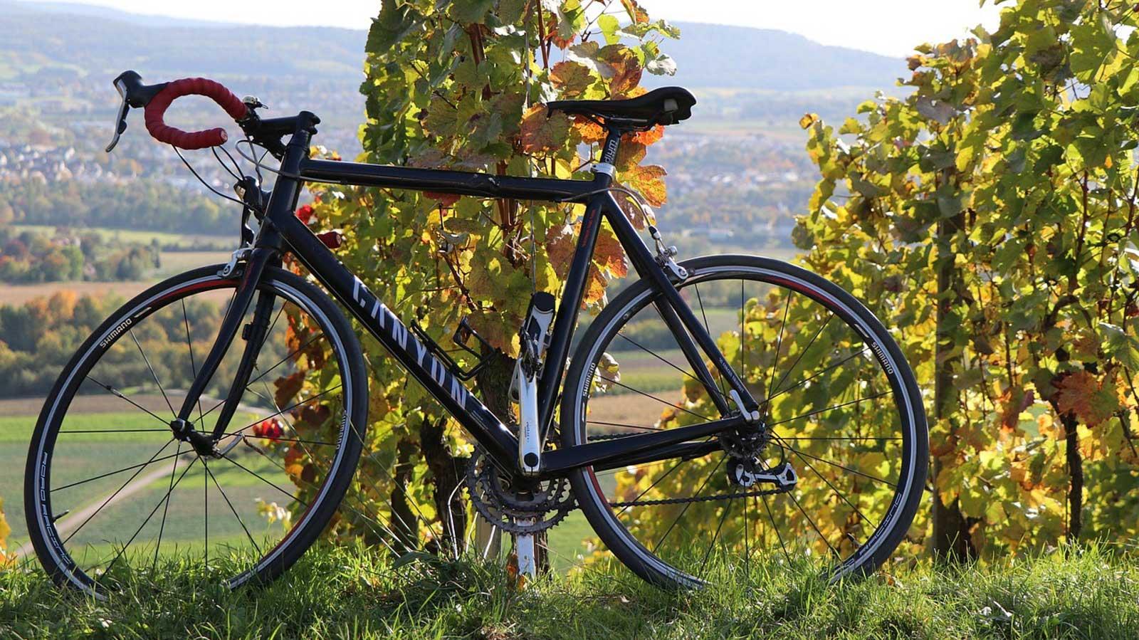 soave wine tour bici