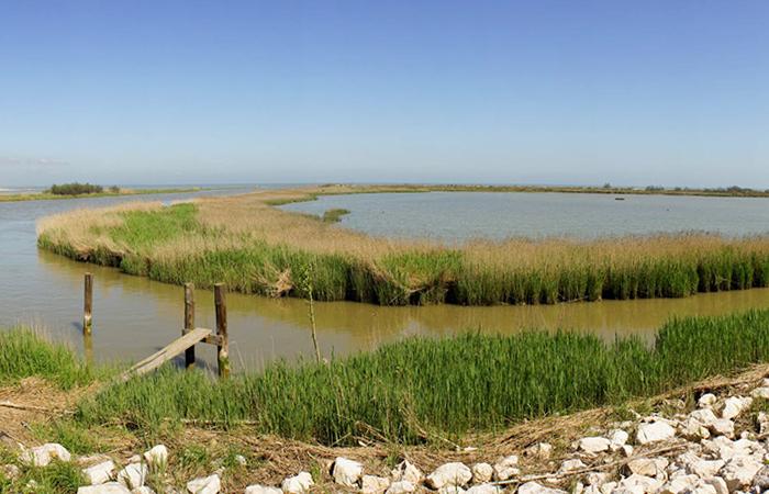 Isole della laguna Veneziana e Delta del Po 6