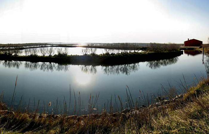 Isole della laguna Veneziana e Delta del Po 7