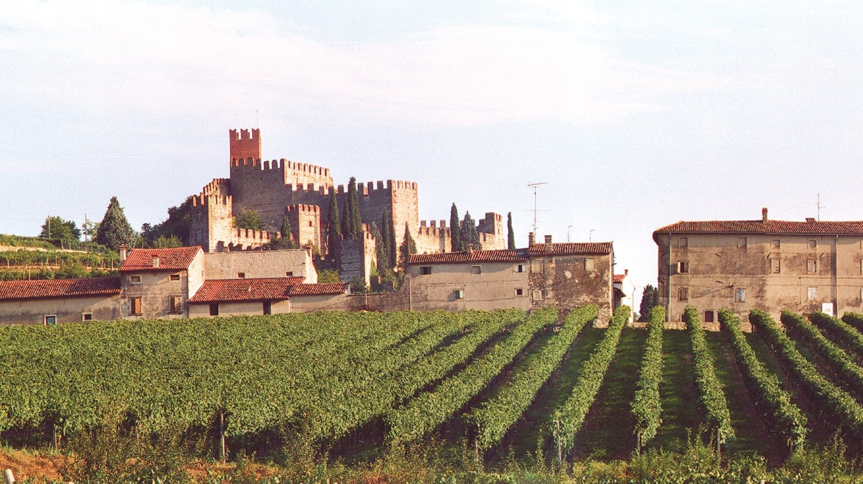 soave wine tour